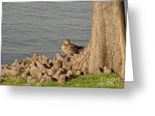 Bethany Lakes Duck Greeting Card