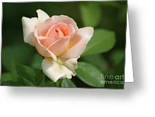 Betty White Rose Greeting Card