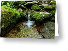 Between The Moss Greeting Card