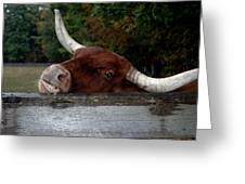 Beware Smiling Bull Greeting Card