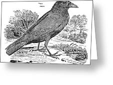 Bewick: Raven Greeting Card by Granger