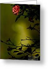 Beyond The Rose Greeting Card