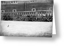 Bicycles In Black And White Greeting Card