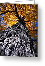 Big Autumn Tree In Fall Park Greeting Card