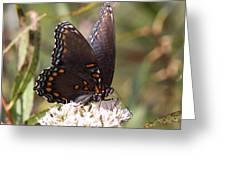 Big Beauty Greeting Card