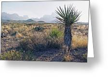 Big Bend National Park 2 Greeting Card