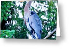 Big Bird - Great Blue Heron Greeting Card