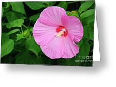 Big Bold Pink Beauty Greeting Card