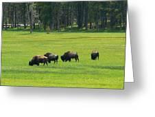 Big Boy Meadow Greeting Card