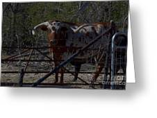 Big Bull Long Horn Greeting Card