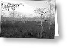 Big Cypress Winter Greeting Card