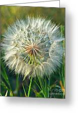 Big Dandelion Seed Greeting Card