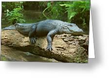 Big Gator On A Log Greeting Card
