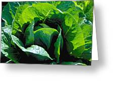 Big Green Cabbage Greeting Card