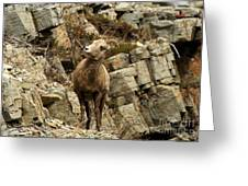 Big Horn On The Rocks Greeting Card