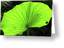 Big Leaf Greeting Card