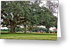 Big Oak And The Tractors Greeting Card