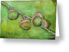 Big Oaks From Little Acorns Grow Greeting Card by Judi Bagwell