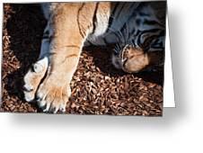 Big Paws Greeting Card