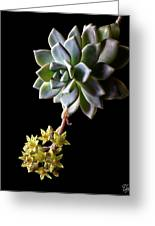 Big Sedum Greeting Card
