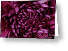 Big Wet Purple Greeting Card