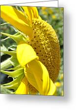 Big Yellow Sunflower Greeting Card
