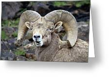 Bighorn Giant Greeting Card