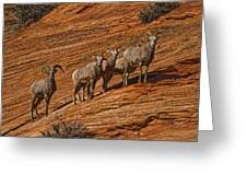 Bighorn Sheep, Zion National Park, Utah Greeting Card