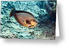 Bignose Unicornfish Greeting Card