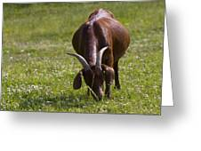 Billy Goat Or Nanny Goat  Greeting Card
