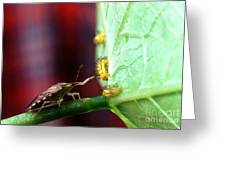 Biocontrol Of Bean Beetle Greeting Card