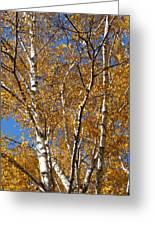Birch Beauty Greeting Card