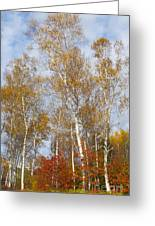 Birch Grove 4269 Greeting Card