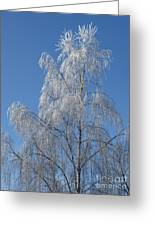 Birch In Frost. Greeting Card