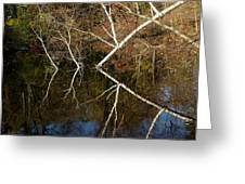 Birch Lake Reflections Greeting Card