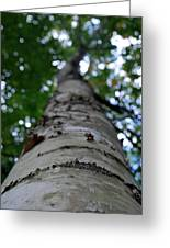 Birch Perspective Greeting Card