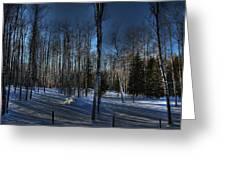 Birch Shadows Greeting Card