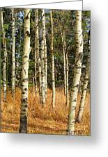 Birch Tree Abstract Greeting Card
