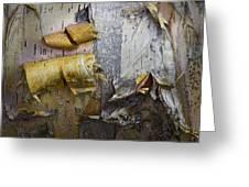 Birch Tree Bark No.0863 Greeting Card