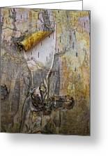 Birch Tree Bark No.0889 Greeting Card