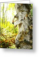 Birch Tree Greeting Card