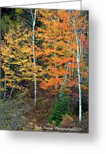 Birch Trees And More Greeting Card