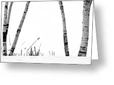 Birch Trees In Snow Greeting Card