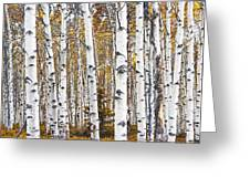 Birch Trees No.0644 Greeting Card