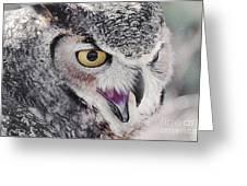 Bird 4 Greeting Card