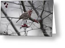Bird And Berry 3 Greeting Card