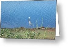 Bird At Lake Varner Greeting Card