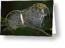 Bird-cherry Ermine Caterpillars Greeting Card