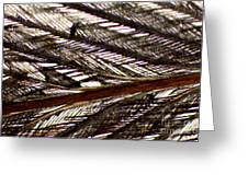 Bird Feather Greeting Card