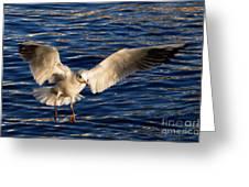 Bird Flying Greeting Card